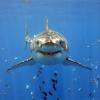 26 Chilling Shark Photographs