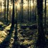 Capturing Perfect Woodland Scenes