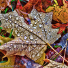 How to make the most of Autumn Photography