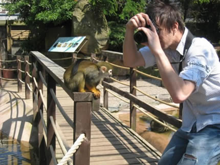 Me Photographing Monkey